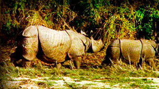 Indian Rhinoceros. On The Tracks Of The Unicorn
